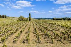 Bearbeitung von Weinbergen nahe Narbonne Frankreich lizenzfreies stockbild