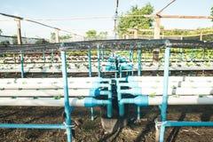 Bearbeitungshydroponikgemüse im Bauernhof Lizenzfreie Stockfotos