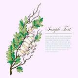 Bearberry gałązka z kwiatami royalty ilustracja