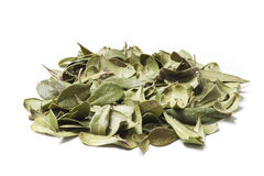 Bearberry Leaves on a Pile. Bearberry leaves isolated on white background. Bearberry (Arctostaphylos uva-ursi) is a type of plant of the genus Arctostaphylos royalty free stock photo