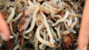 Bearbeta havsmusslor för mat arkivfilmer