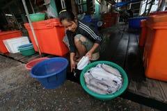 Bearbeta tioarmade bläckfisken Royaltyfri Fotografi