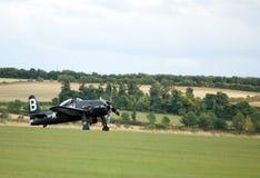 Bearcat landing Royalty Free Stock Photos