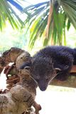 Bearcat Stock Images