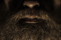 Beard. Caucasian male with large beard Stock Photography
