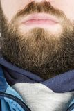 Beard Close Up. A young male with a full beard, detail image Stock Photos