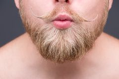Beard Royalty Free Stock Images