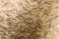 Beard Hair Face Growth stock images