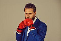 Bearded boxer man, businessman in outfit and red boxing gloves. Bearded boxer man or businessman in formal blue outfit and red boxing gloves in punch position royalty free stock image