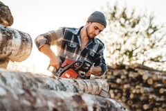 Bearded brutal lumberjack wearing plaid shirt sawing tree with chainsaw for work on sawmill. Wooden sawdust fly apart royalty free stock photos