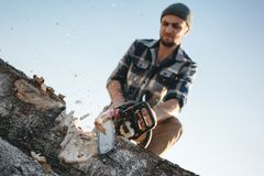 Bearded brutal lumberjack worker saw the tree with a chainsaw. Sawdust fly apart royalty free stock photography