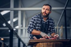 Bearded butcher cut fresh bacon meat. Bearded butcher dressed in a fleece shirt cut fresh bacon meat stock photos