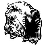 Bearded Collie Dog Stock Images