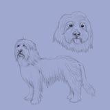 Bearded Collie-Hundeskizze Lizenzfreies Stockfoto
