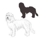 Bearded Collie-Hundeskizze Lizenzfreies Stockbild