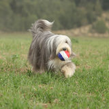 Bearded collie running with a toy Royalty Free Stock Photography