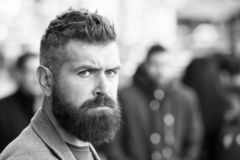 Bearded and cool. Barber tips maintain beard. Hipster appearance. Stylish beard and mustache fall and winter season. Beard fashion and barber concept. Man royalty free stock photography