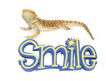 Bearded Dragon can Smile Royalty Free Stock Photo