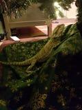 Rodney the Dragon royalty free stock photos