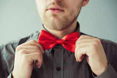 Bearded face and hands correcting red bowtie. Bearded face of a young man and hands correcting red bowtie on the shirt Royalty Free Stock Photo
