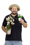 Bearded florist holding white flower pots. Bearded florist holding white flowers in two pots Stock Image