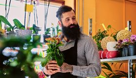 The bearded flower seller holds flowers in a pot in a garden mar. The bearded male flower seller holds flowers in a pot in a garden market shop stock photo
