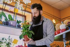 The bearded flower seller holds flowers in a pot in a garden mar. The bearded male flower seller holds flowers in a pot in a garden market shop stock images