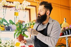 The bearded flower seller holds flowers in a pot in a garden mar. The bearded male flower seller holds flowers in a pot in a garden market shop stock photos