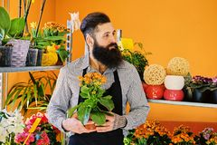 The bearded flower seller holds flowers in a pot in a garden mar. The bearded male flower seller holds flowers in a pot in a garden market shop stock photography
