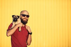 Bearded guy in sunglasses is holding pug puppy royalty free stock images