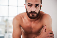 Bearded handsome. Stock Images