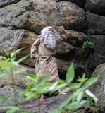 Bearded hermit in nature Stock Photos