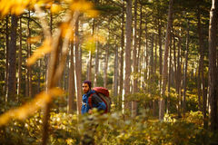 Bearded hiker man walks in a pine yellow autumn forest. Backpacker hipster enjoys fall landscape. Stock Photos