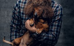 Funny badger dog in man`s curly beard. Bearded hipster male in a blue plaid shirt holds in arms brown badger dog Stock Photos