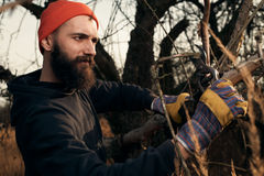 Bearded lumberjack cutting branches Stock Images