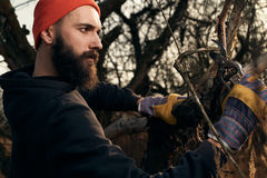 Bearded lumberjack cutting branches Royalty Free Stock Image