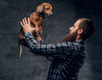 Bearded male holds a brown badger dog. Bearded hipster male in a blue plaid shirt holds in arms brown badger dog Royalty Free Stock Photo