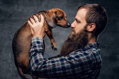Bearded male holds a brown badger dog. Bearded hipster male in a blue plaid shirt holds in arms brown badger dog Royalty Free Stock Photos