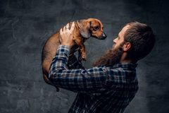 Bearded male holds a brown badger dog. Bearded hipster male in a blue plaid shirt holds in arms brown badger dog Stock Image