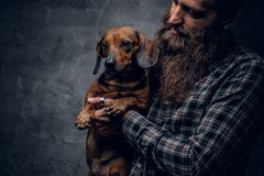Bearded male holds a brown badger dog. Bearded hipster male in a blue plaid shirt holds in arms brown badger dog Stock Photography