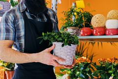 Bearded male with tattooed arms. Holds a pot with flowers stock photo