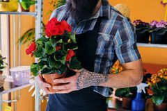 Bearded male with tattooed arms. Holds a pot with flowers royalty free stock image