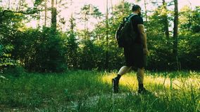 A bearded man with a backpack in good physical shape is walking through the forest. Recreation. Training. Fresh air. Health stock video
