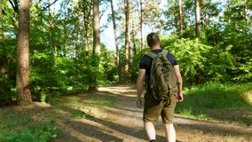 A bearded man with a backpack walks through the forest. The camera moves behind him. Sunny day. Journey. Active lifestyle. Adventu stock video