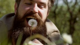 Bearded man blowing dandelion - close up partrait. With nature and dandelions. Handsome man sitting on the field in. Green grass and blowing dandelion. Enjoy stock video