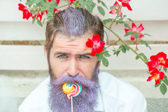 Bearded man with blue beard and lollipop Royalty Free Stock Photo
