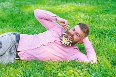 Bearded man with daisy flowers in beard lay on meadow, lean on hand, grass background. Guy with bouquet of daisies in. Beard twists mustache. Man with beard on royalty free stock photography