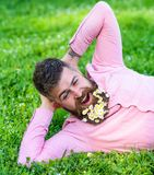 Bearded man with daisy flowers in beard lay on meadow, lean on hand, grass background. Man with beard on yawning face. Have rest. Hipster with bouquet of stock images