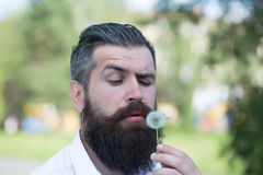 Bearded man with dandelion Stock Image