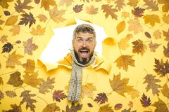Bearded Man are getting ready for autumn sale. Funny fac . Black friday shopping. Bearded Man are getting ready for autumn sale. Funny fac . Black friday royalty free stock photo